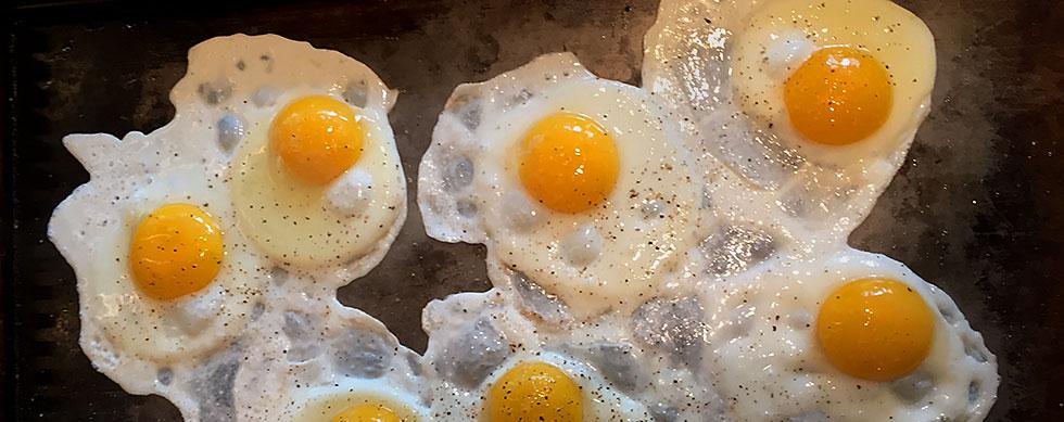 hyatt training eggs